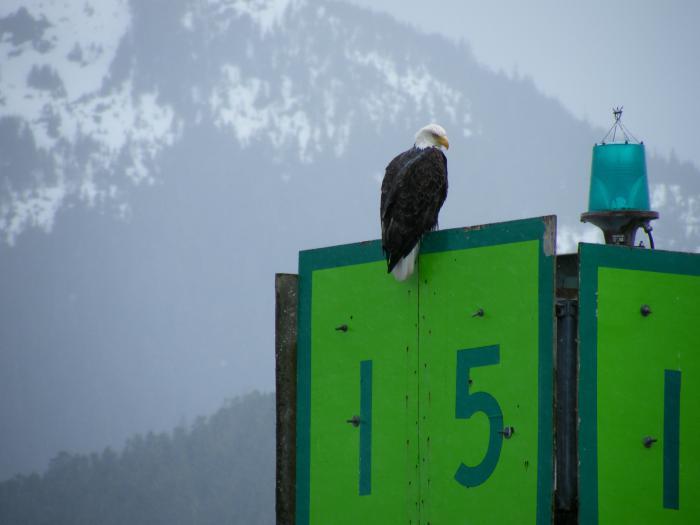 Canada and Alaska 398.JPG
